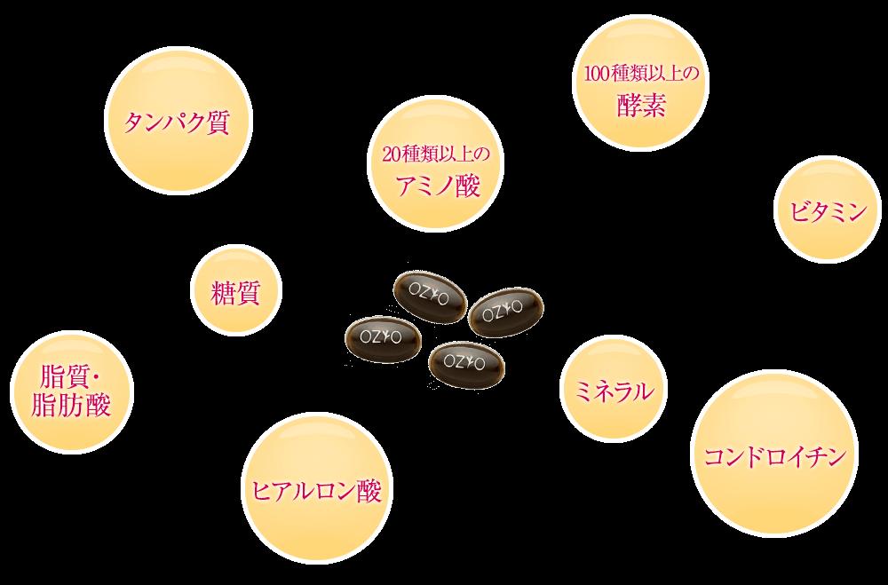 タンパク質 20種類以上のアミノ酸 100種類以上の酵素 脂質・ 脂肪酸糖質 ビタミン ヒアルロン酸 ミネラル コンドロイチン