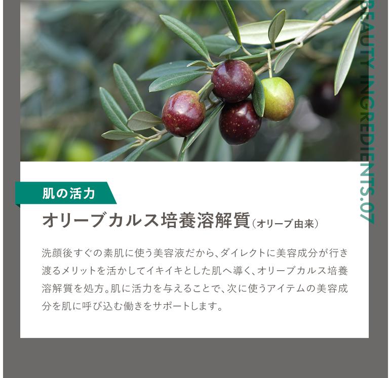 オリーブカルス培養溶解質 オリーブ由来